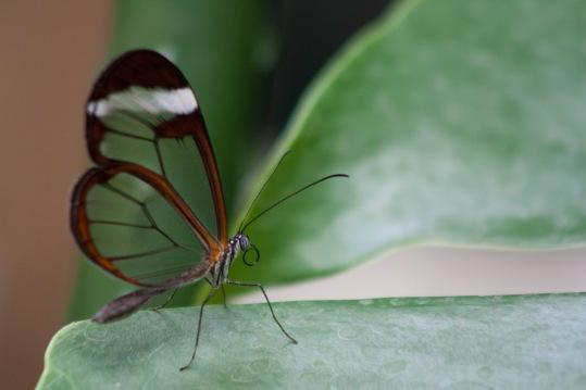 Doorkijk | Vlinder