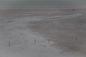 Vogels op laagwater
