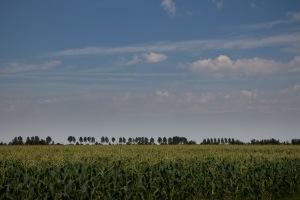 Maisvelden