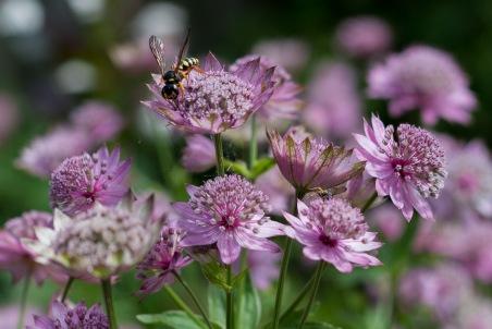 week 26, De bloemetjes en de bijtjes. Topdrukte in de natuur.