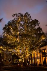 Lichtjesboom