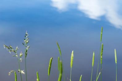 weerspiegeling van de lucht in het weeltje
